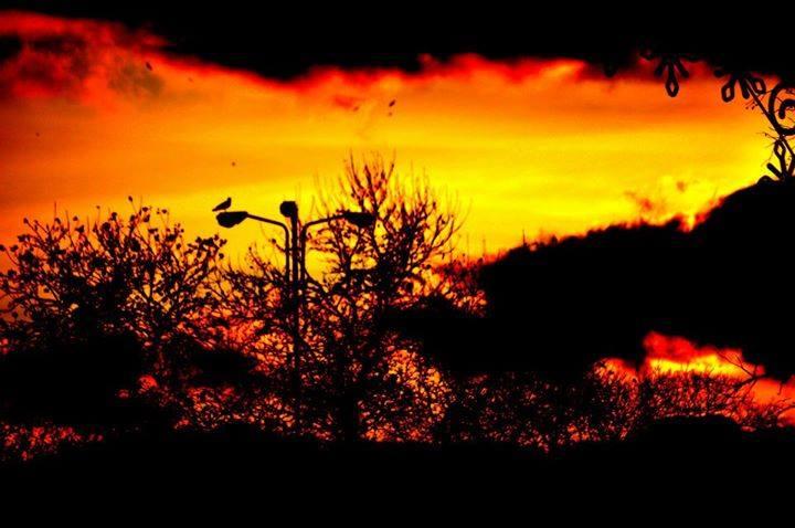 Птиците умират сами... Снимка: Боян Симеонов